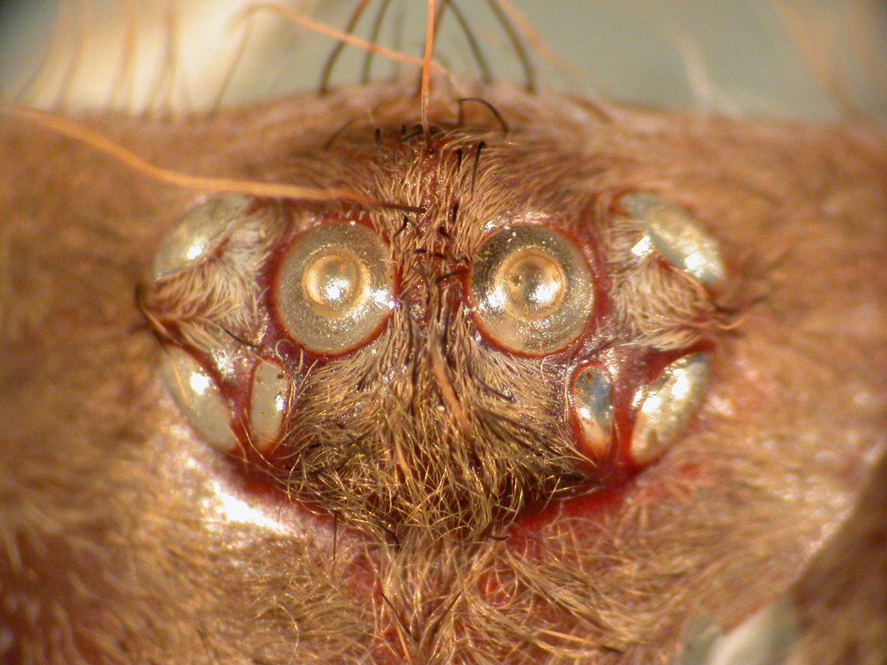 Augenhügel